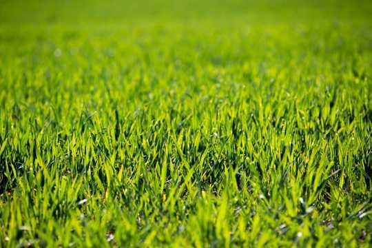 绿草原图片