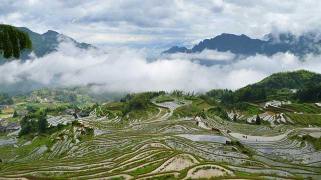 浙江丽水云和梯田景物图片