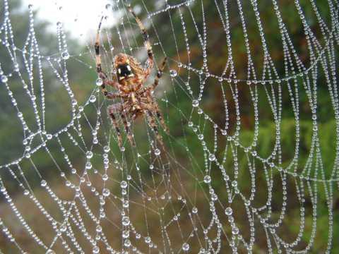 蜘蛛网上蜘蛛图片
