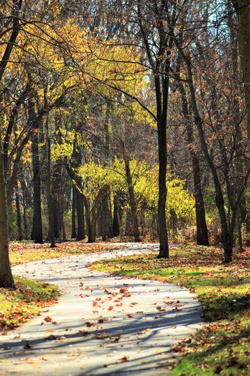 秋季树木黄叶图片