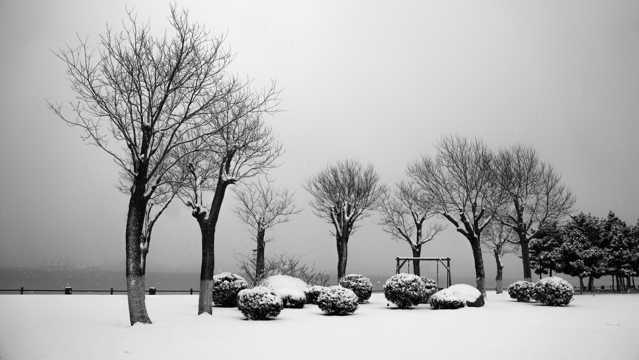 山东威海的雪景图片
