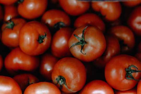 自然成熟番茄图片