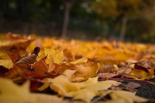 秋天黄叶光景图片