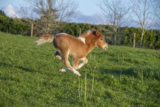 奔跑的小马图片