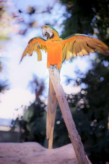 中型萌宠鹦鹉图片