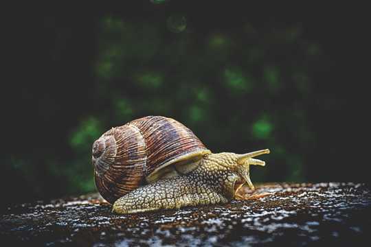 老蜗牛拍摄图片