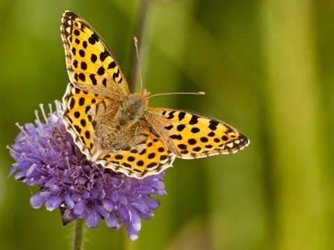 花卉上的蝴蝶图片下载