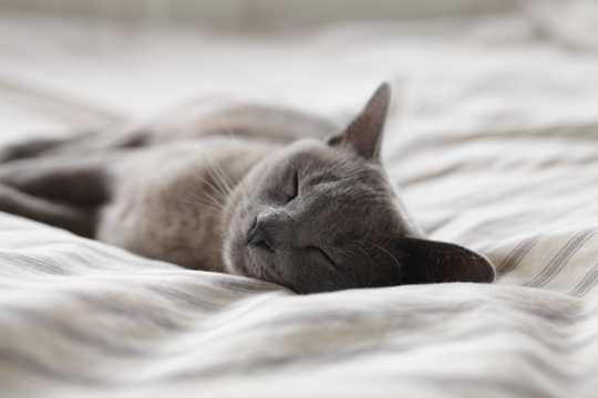 睡觉的小猫高清图片