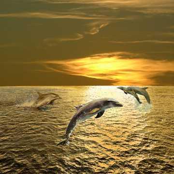 高清乖巧海豚图片下载