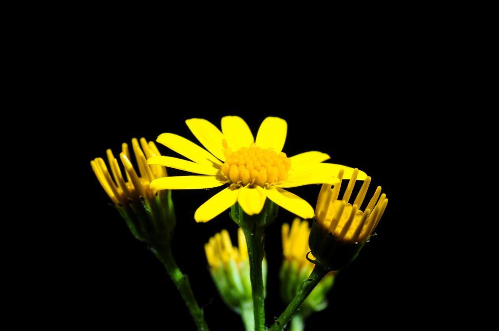 尖尖的花, 开花, 绽放, 黄色, 关闭, 花, 小
