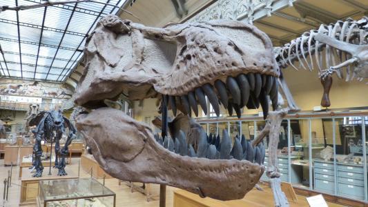 博物馆, 骨架, 恐龙, 恐龙骨架, 捕食恐龙