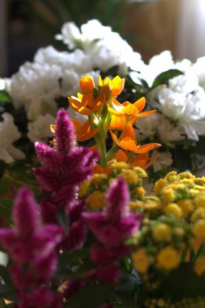 花, 春天, 幼苗, 新鲜, 香, 颜色, 春天的花朵
