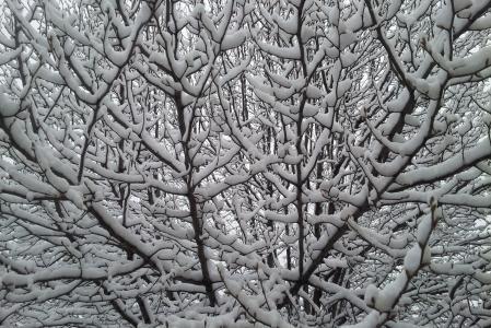 雪树, 雪, 冬天, 树, 感冒