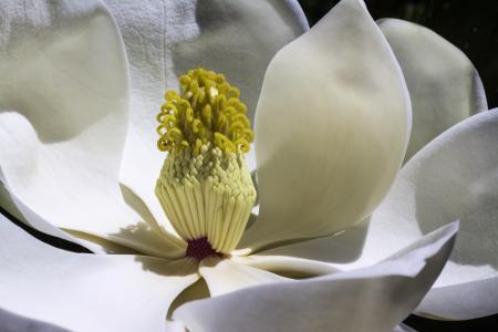 木兰, 花, 公园, 春天, 花园, 白花, 花
