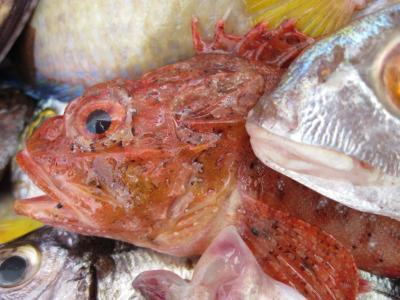 鱼, 弗里施, 芳, 红色, 海, 鱼市场, 市场