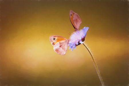 图像, 绘画, 油漆, 画, 蝴蝶, 两个, 两只蝴蝶