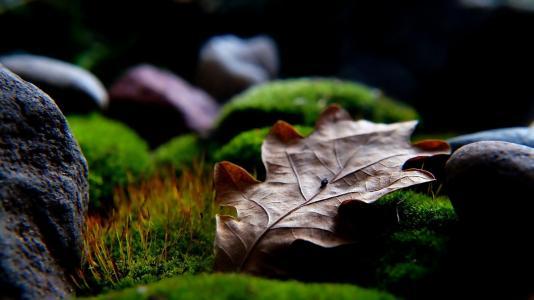 自然, 植物, 干, 叶, 石头, 绿色, 青苔