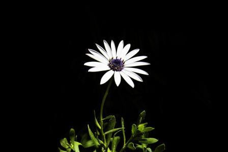 绽放, 开花, 植物区系, 花, 植物