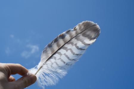 羽毛, 蓝色, 天空, 白色, 动物, 自然, 符号