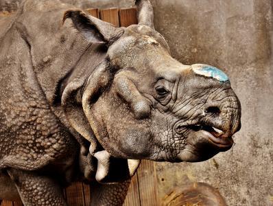 犀牛, 动物, 动物世界, 厚皮类动物, 犀牛, 动物园, 皮肤