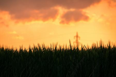 大麦, 日落, 麦田, 云彩, strommast, abendstimmung, 休息