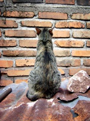 猫, 宠物, 猫科动物, 砖