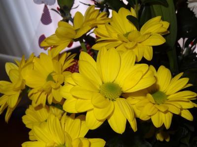 花, 自然, 植物