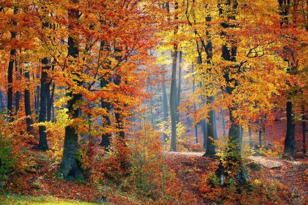 伍兹, 森林, 自然, 景观, 树, 森林景观, 秋天