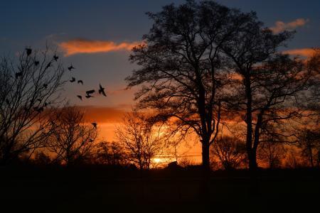 日出, morgenrot, 天空, 鸟, 大气, 橙色