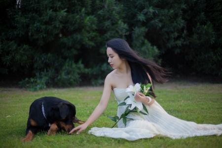 罗威纳犬, 狗, 婚纱礼服, 草坪, 百合, 女孩, 长长的头发