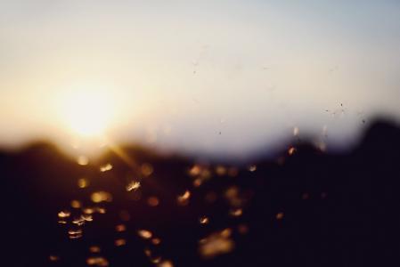 日落, 散景, 蒲公英, 夏季, 直接光源