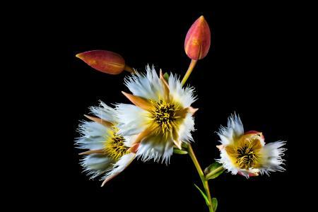 开花, 绽放, 白色, 开花的树枝