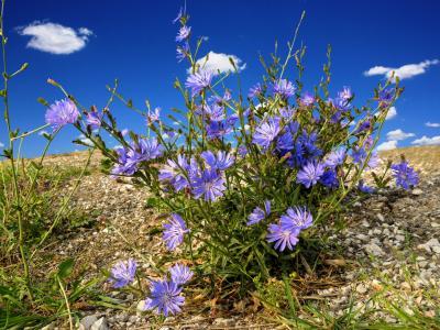 秋天的心情, 矢车菊, 云彩, 蓝色, 草甸, 夏季, 开花