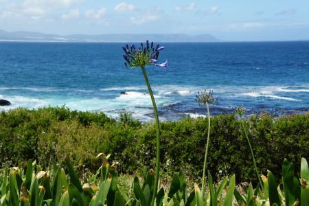 赫曼纽斯, 南非, 海洋, 自然, 海岸, 水, 假日