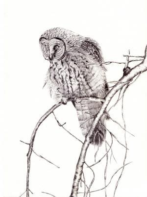 钢笔, 动物, 鸟, 绘图, 插图, 绘画, 艺术