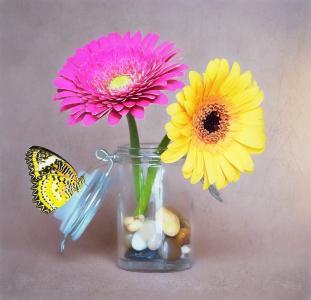 花, 非洲菊, 粉色, 黄色, 玻璃, 花瓶, 装饰石