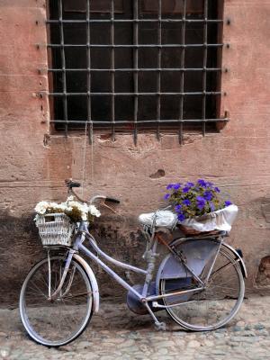 自行车, 花, 垃圾, 历史中心, finalborgo, 利古里亚, 老