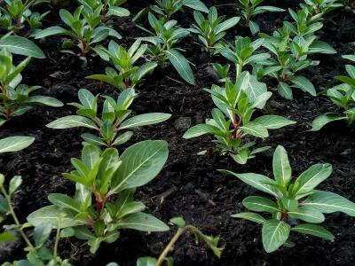 树, 幼树, 培养, 土壤, 植物, 增长, 种植一个花园