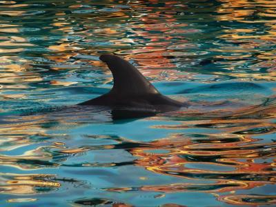 海豚, 减摇鳍, 自然, 蓝色, 水, 海, 动物