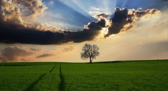 农村, 树, 景观, 阳光, 自然, 天空, 字段
