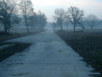 走了, 早上, 自然, 心情, 树木, 树, 户外