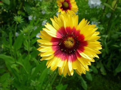 花, 万寿菊, 花园, 花, 脆弱, 花瓣, 新鲜