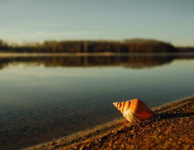特写, 湖, 软体动物, 沙子, 海蜗牛, 壳, 蜗牛