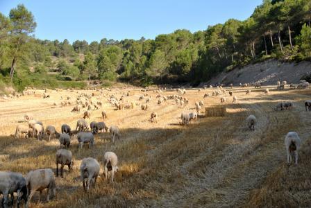 羊, 山羊, 自然, 羊群, 农场, 动物, 农场动物