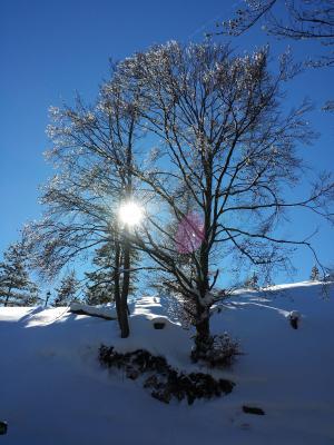 寒冷, 雪, 雪景, 冬天的魔法, 树, 徒步旅行, 自然