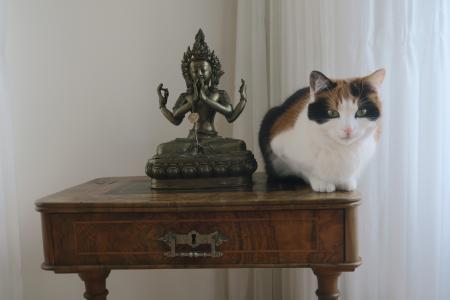 佛教人物, 猫, 冥想, 宠物, 家猫, 动物, 室内