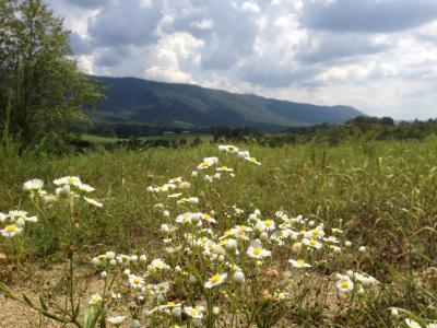 字段, 雏菊, 田纳西州, 自然, 花, 草甸, 夏季