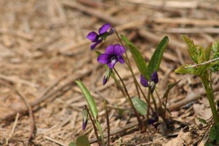 花, 紫色, 自然, 秋天, 紫色的花, 植物, 花