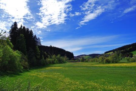 景观, 草甸, 夏季, 天空, 树木