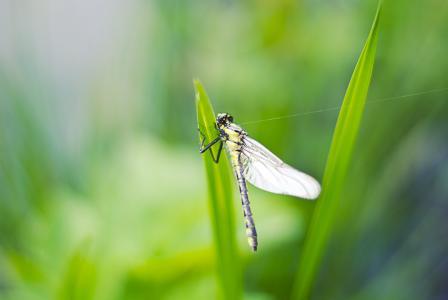 特写, 蜻蜓, 昆虫, 自然, 动物, 特写, 野生动物